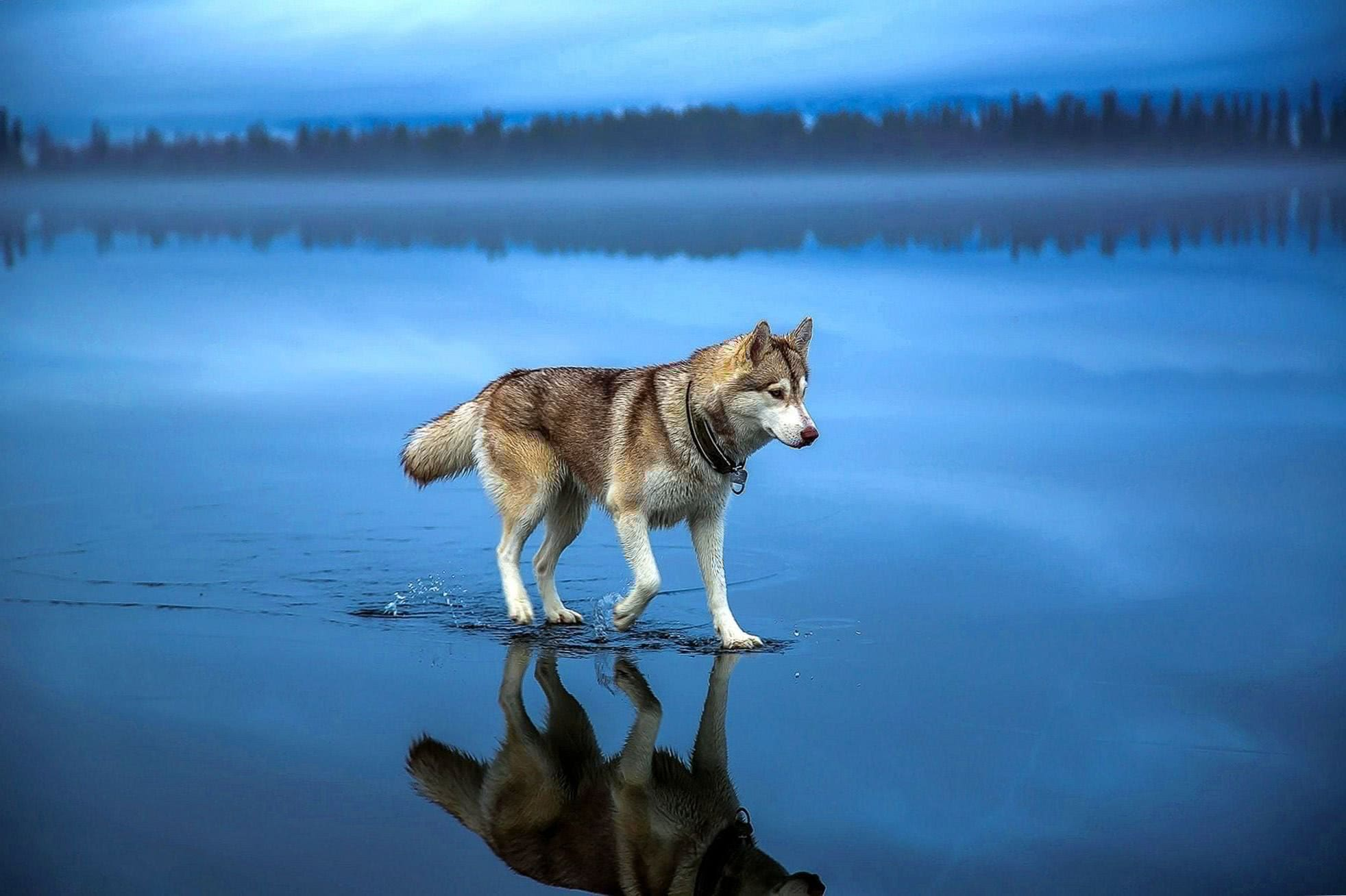 Wolf Landscape Wallpapers HD
