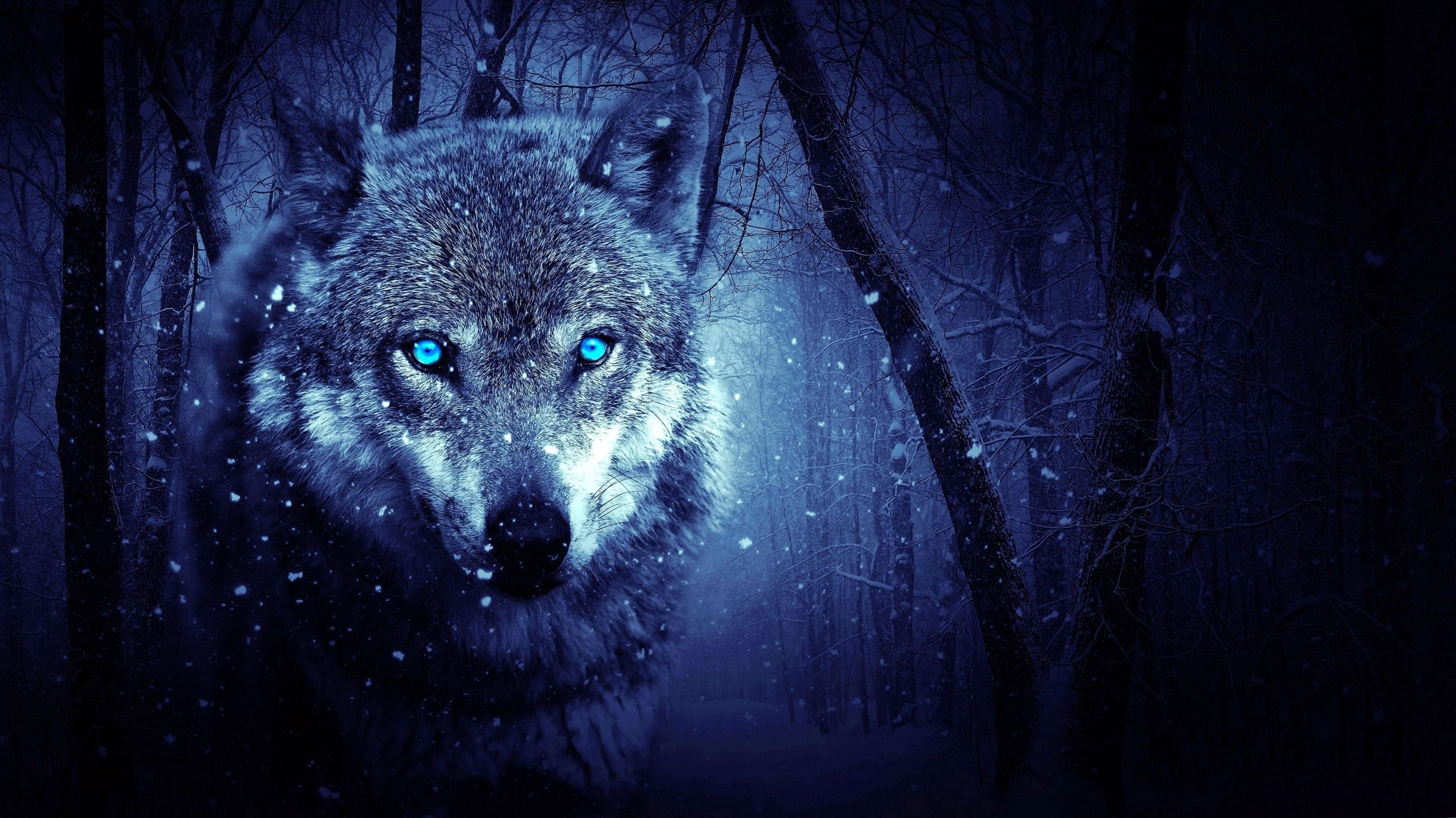 Black Wolf With Blue Eyes Wallpapers Wolf Wallpapers Pro