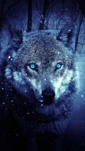 Wolf Wallpapers 320x480