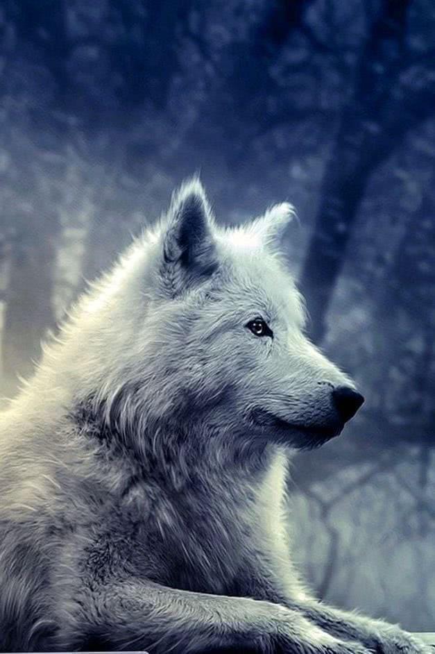 Wallpapers Celular Wolf