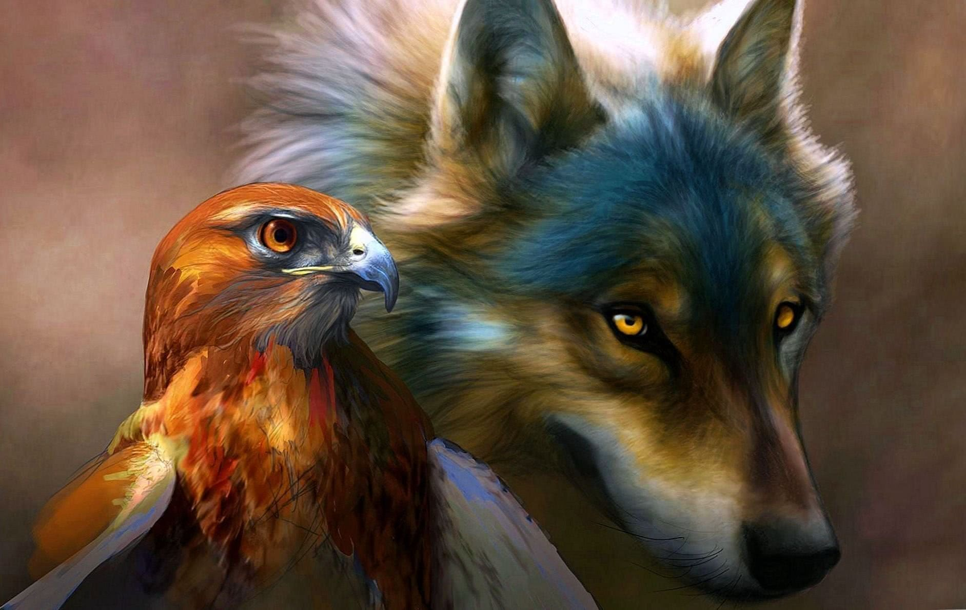 Wolf And Eagle Wallpaper
