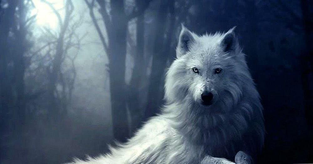 Winter Wolves Desktop Wallpaper