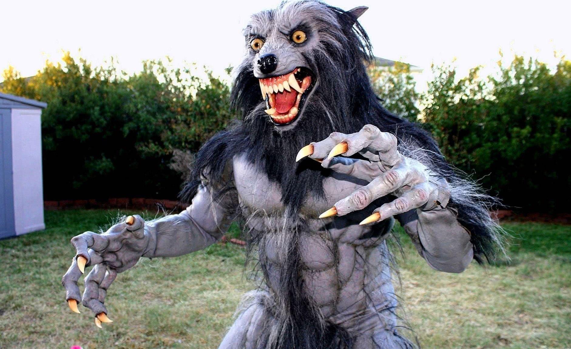 Werewolf Halloween Wallpaper
