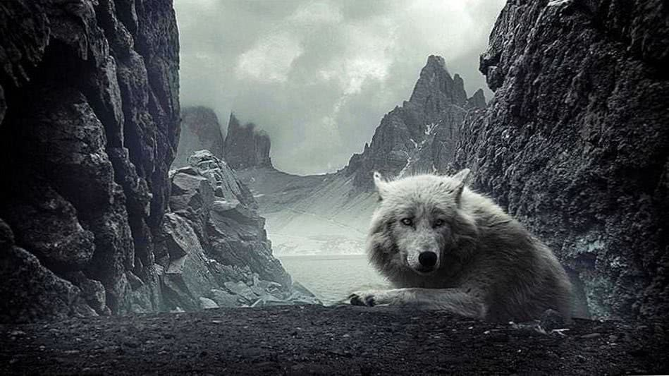 Wolf And Mountain Wallpapers