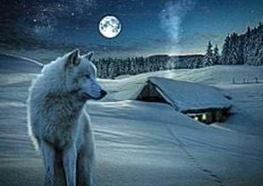 Winter Wolf HD Wallpapers