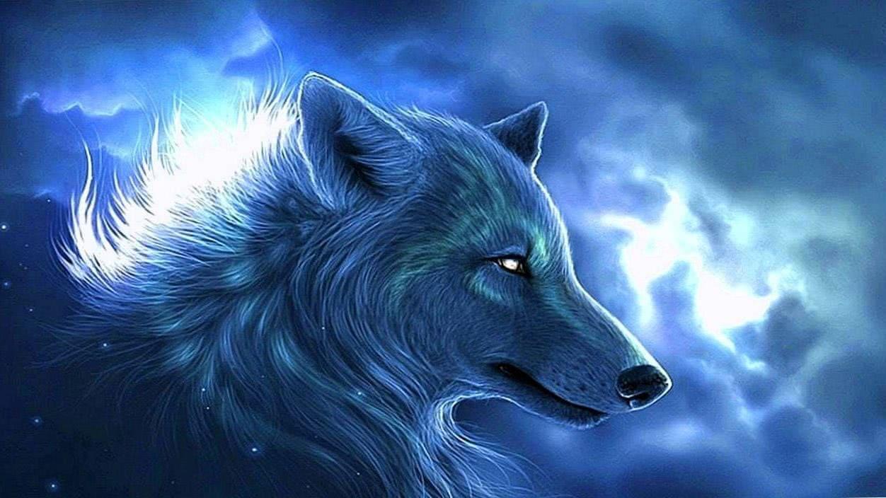 Wallpaper White Wolf 1366×768