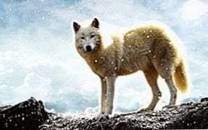 Wolf Wallpapers 1920x1200