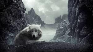 1600x900 Wallpapers White Wolf