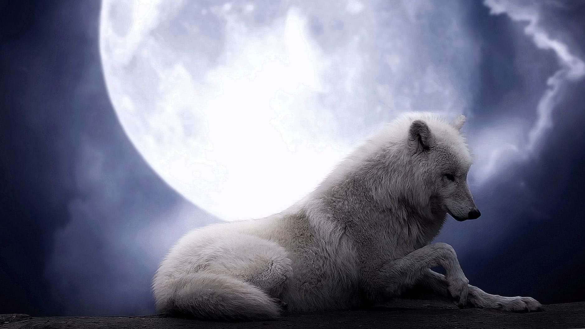 White Wolf Wallpaper HD