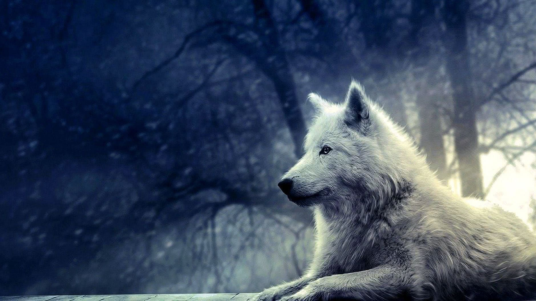 Wallpaper HD White Wolf