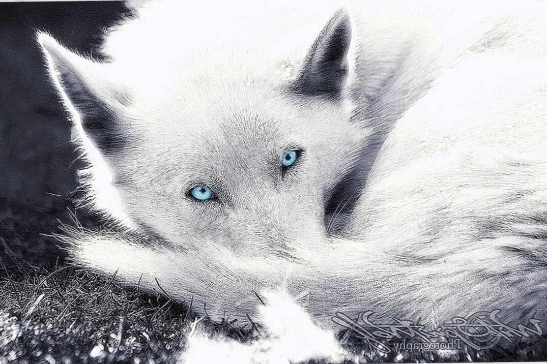 White Wolf Wallpapers With Blue Eyes