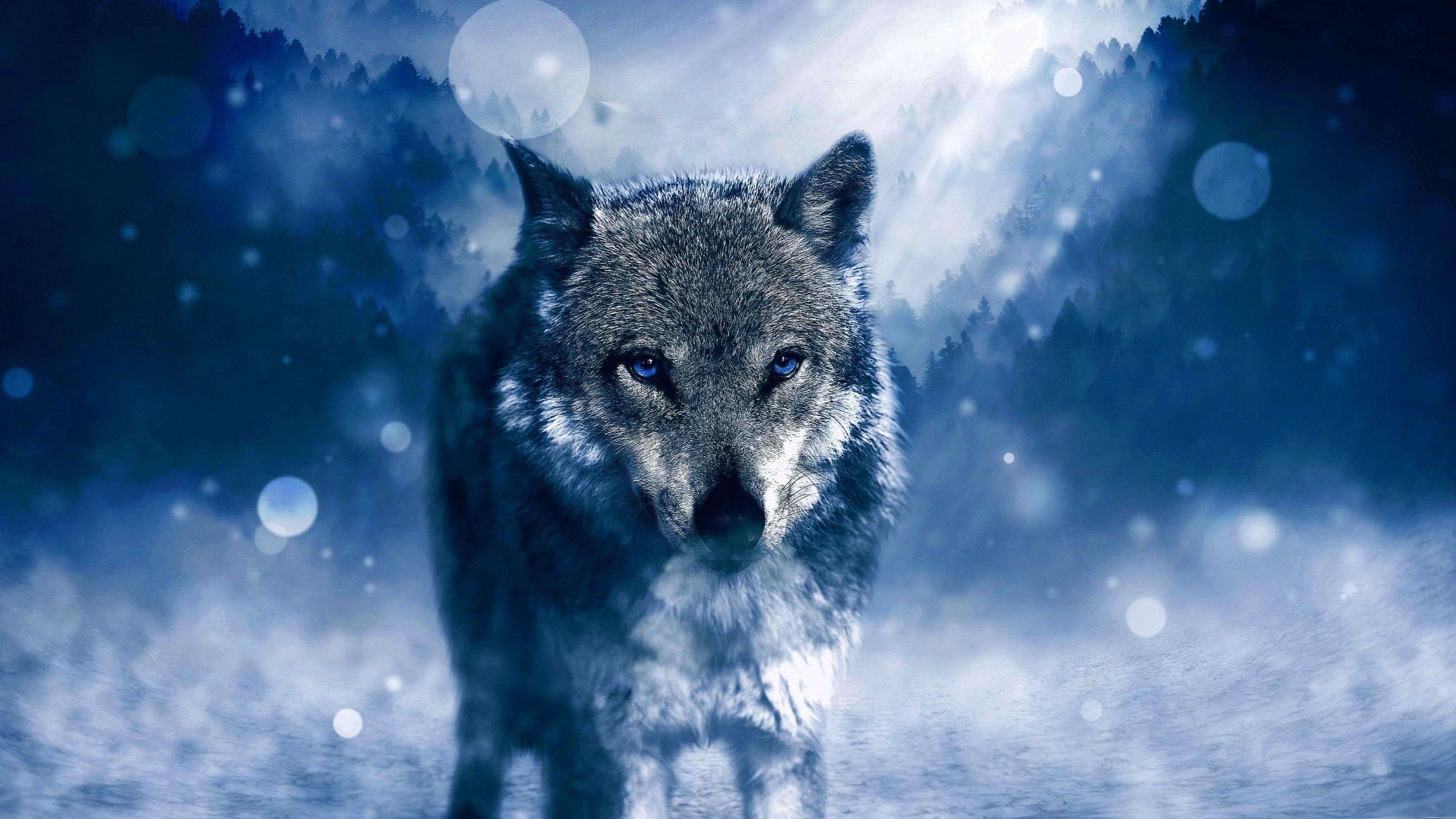 Wild Wolf Full HD Wallpaper