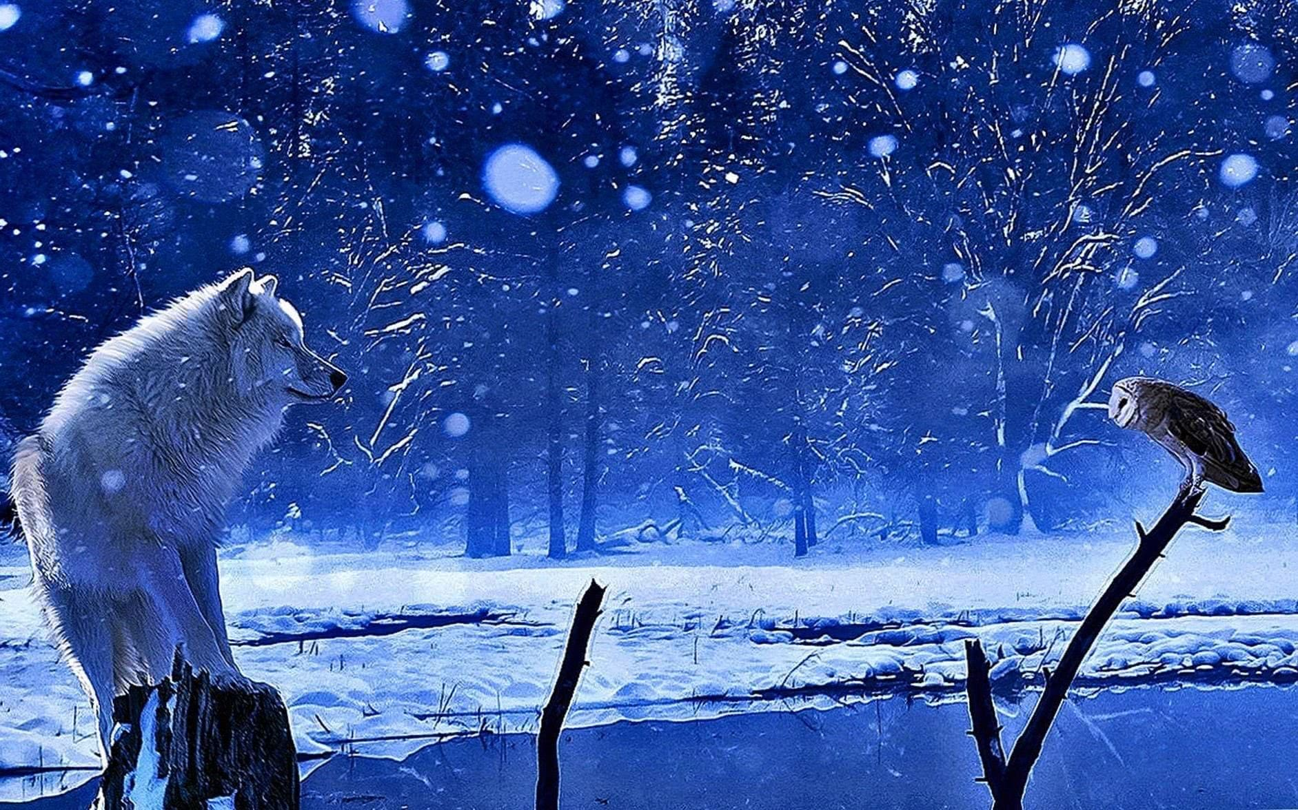 Winter Wolf Wallpapers Wolf Wallpaperspro