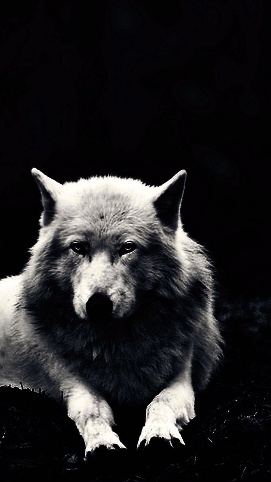 Black Wolf Cell Phone Wallpaper
