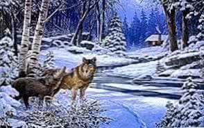 Wolf Wallpapers Winter