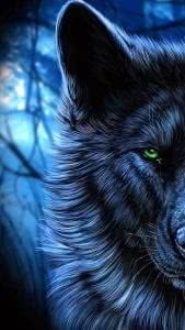 Black Wolves With Blue Eyes Wallpapers
