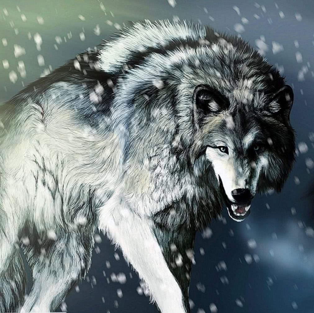 Wolf Wallpapers 2560×1080
