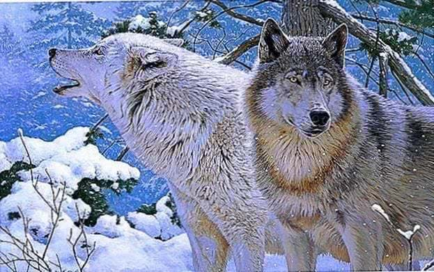 Ultra HD Wallpaper Of Wolves
