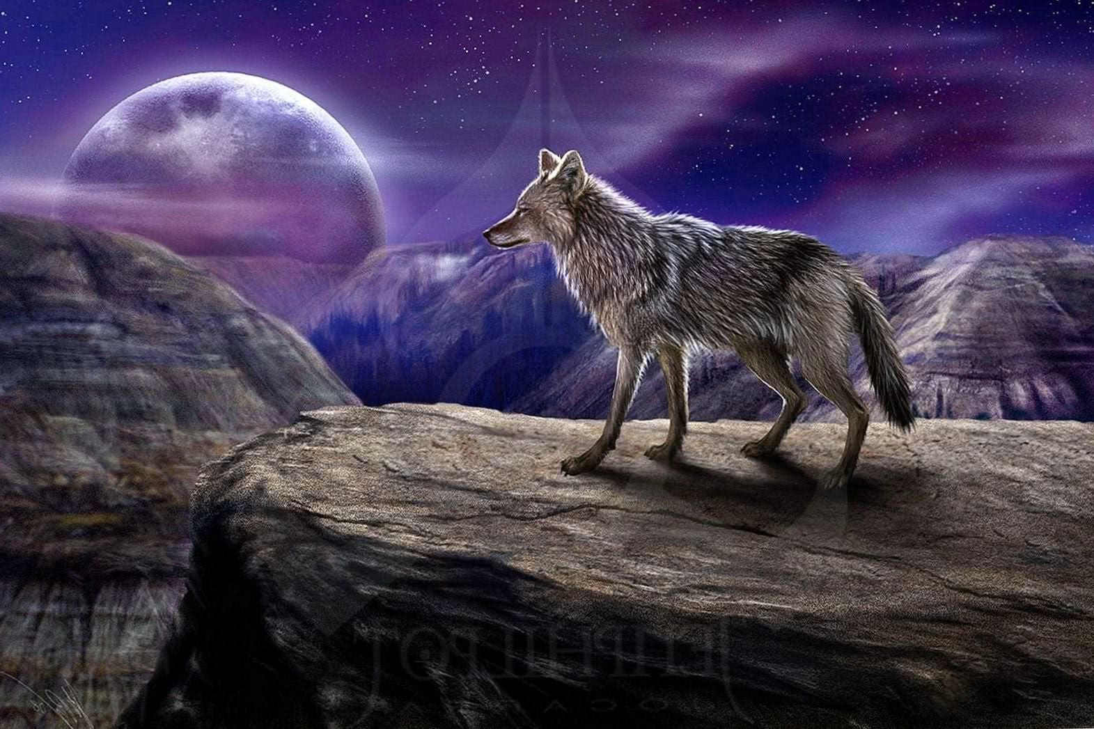 Wolf Alone Wallpapers