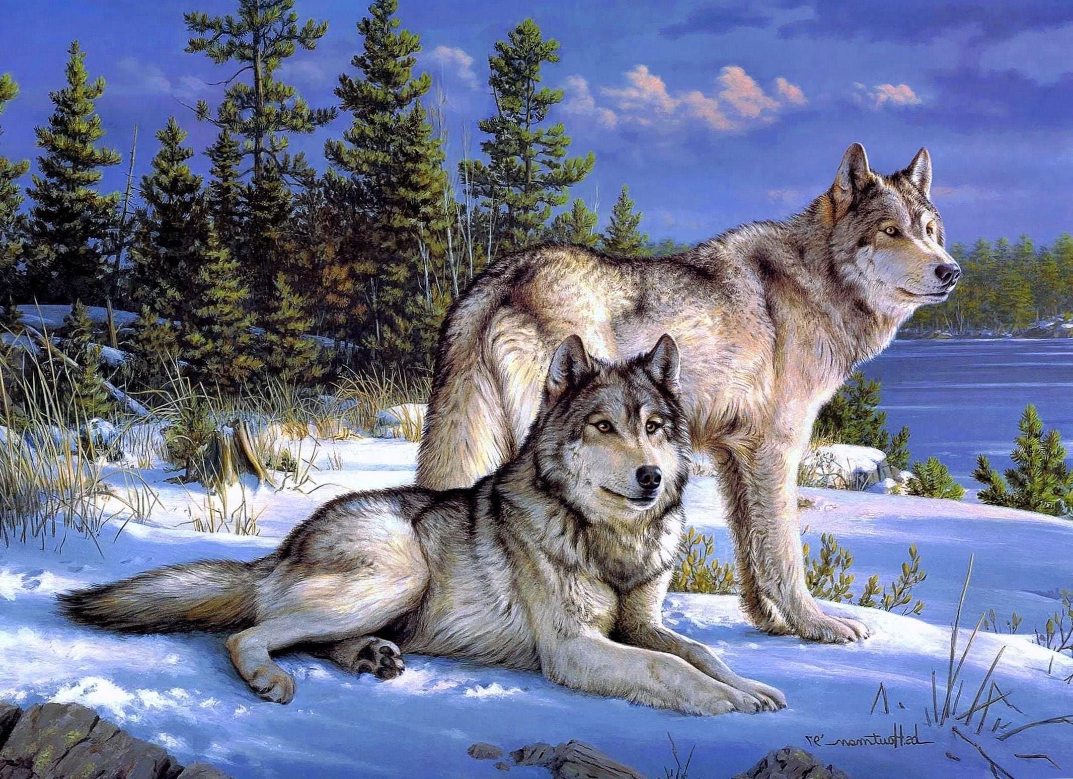 Wallpaper Wolves PC