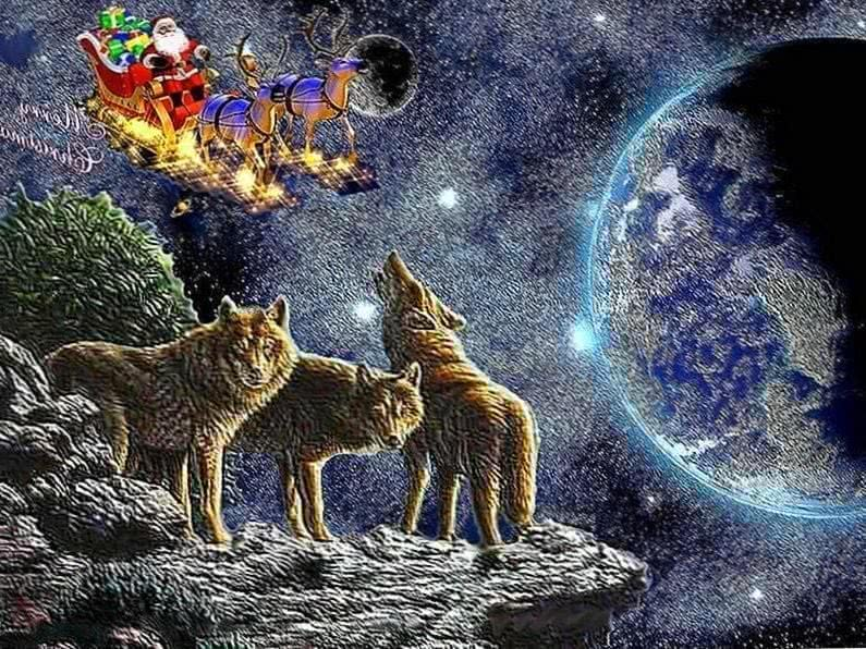Wolf Christmas Wallpapers