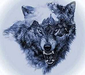 Wolf Danger Wallpapers