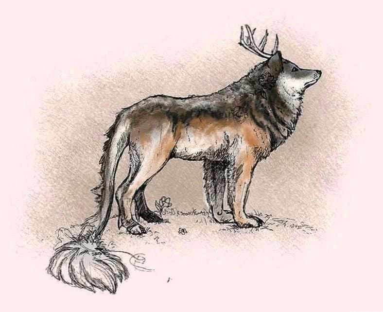 Wallpapers Wolf Deer