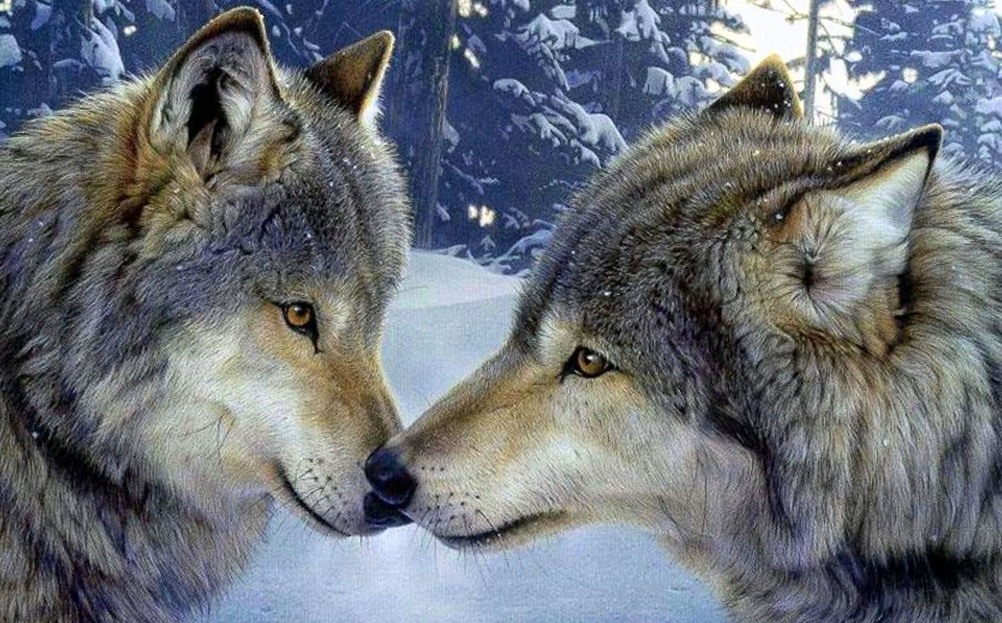 Wolf 4K Desktop Wallpapers