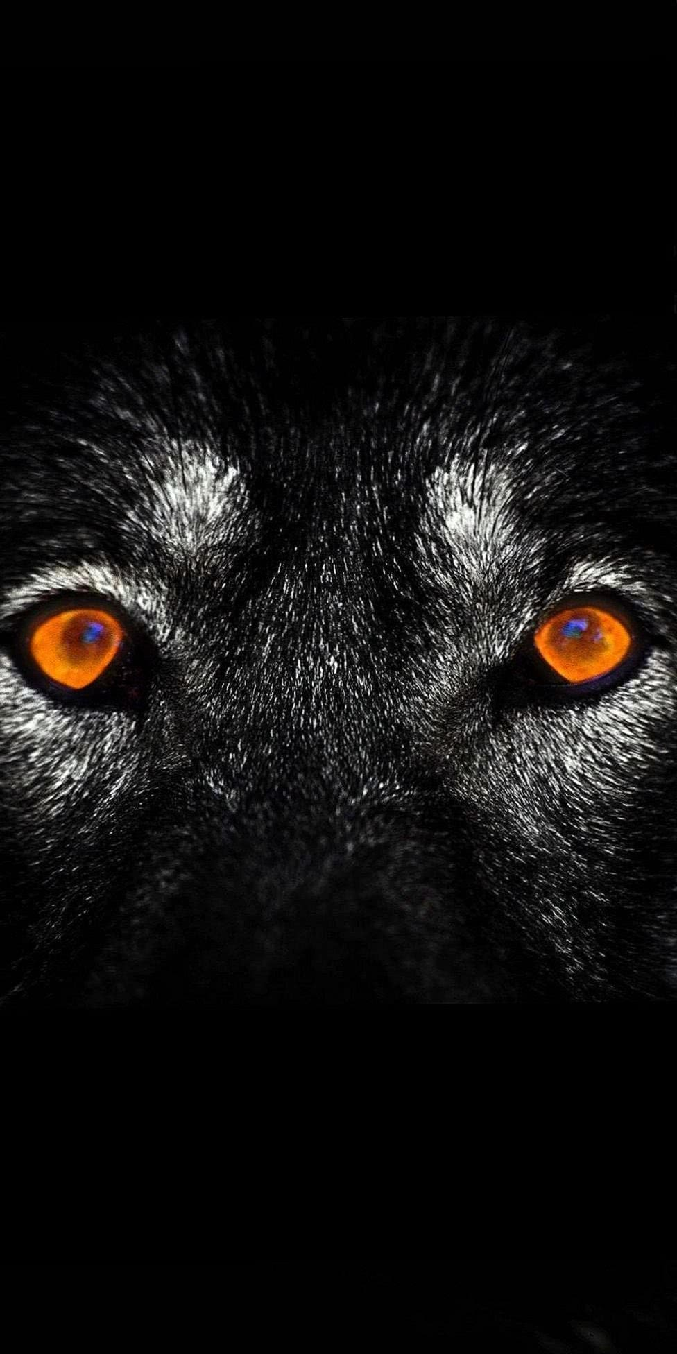 Dark Wolf Handy Wallpaper