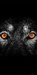 Dark Wolf Eyes Wallpapers