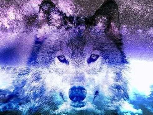 wolf galaxy tumblr recherche google galaxy animals 1 2 wolf wallpapers.pro