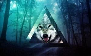 Wolf Wallpapers Tumblr HD