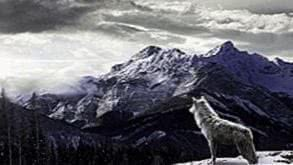 Wolf Mountain Wallpapers