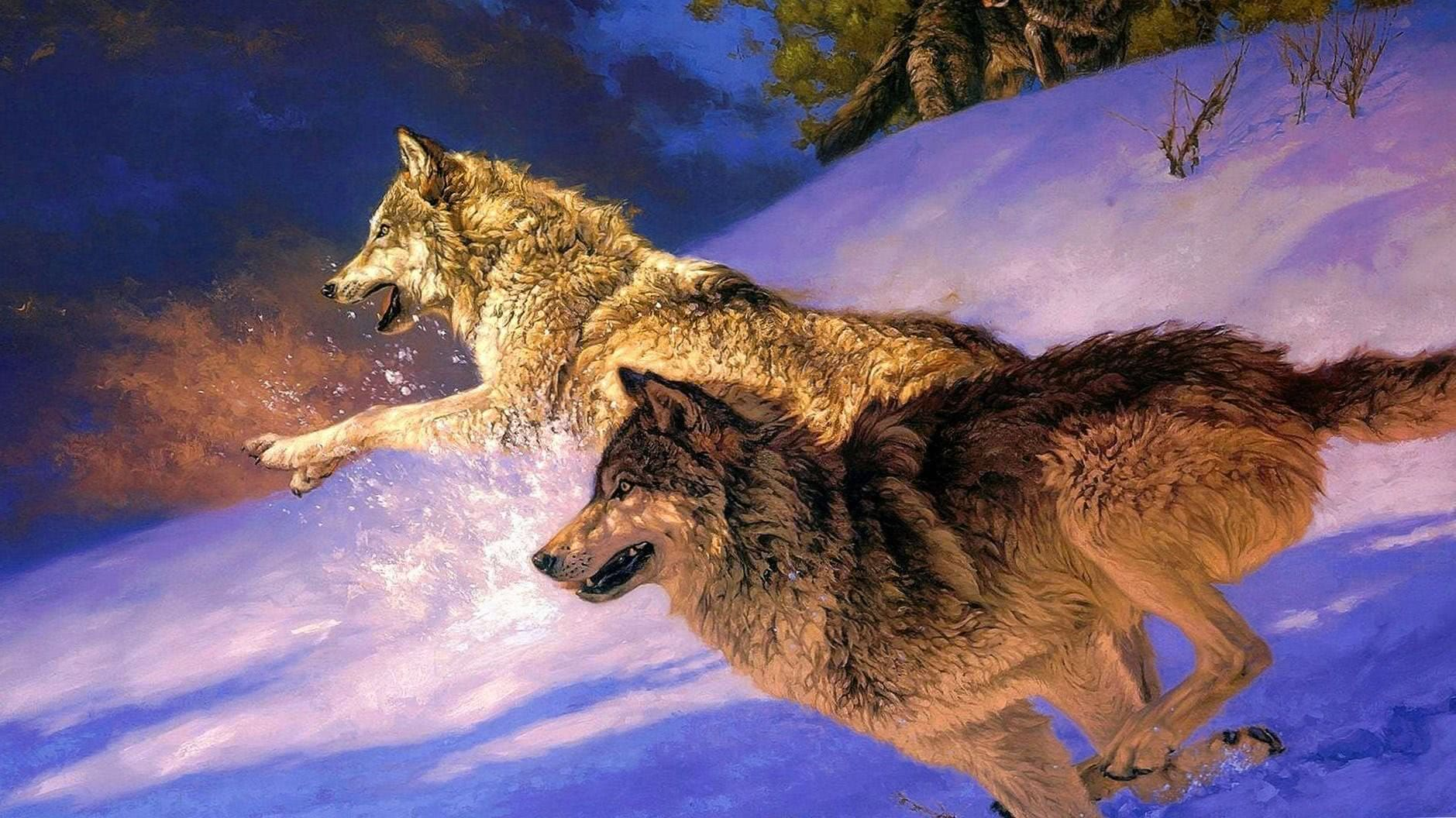 Black Wolf Full HD Wallpaper