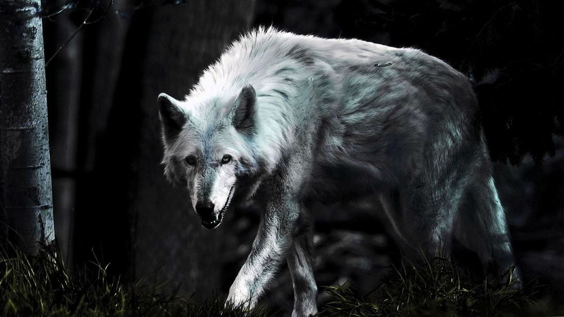 Wallpaper Mobile Lone Wolf