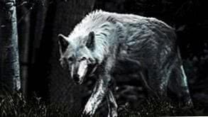 Lone Wolf Android Wallpapers