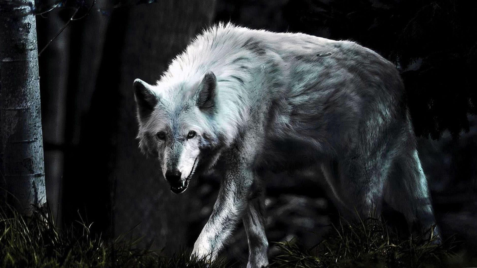 Lone Wolf HD Phone Wallpaper