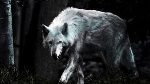 The Lone Wolf HD Wallpapers