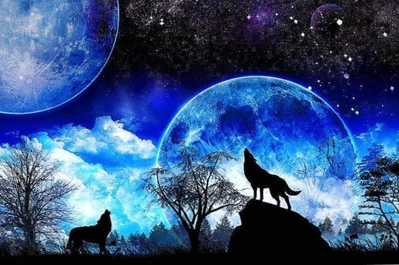 wolf howling at the moon wallpaper wallpapertag wolf wallpapers.pro