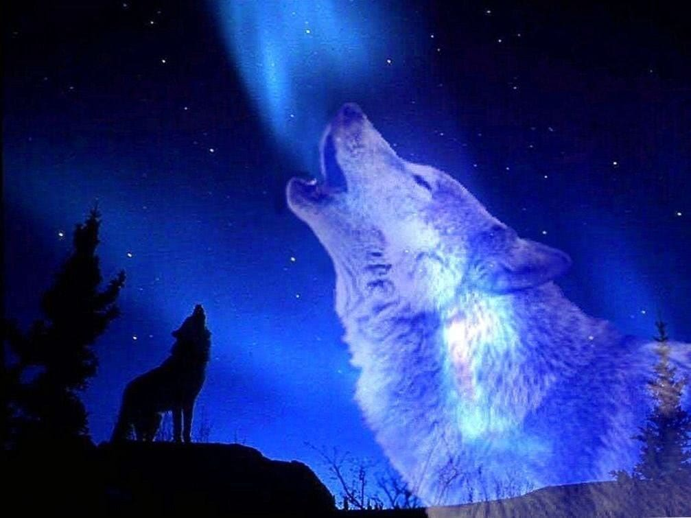 Wolf Howling Moon Wallpapers