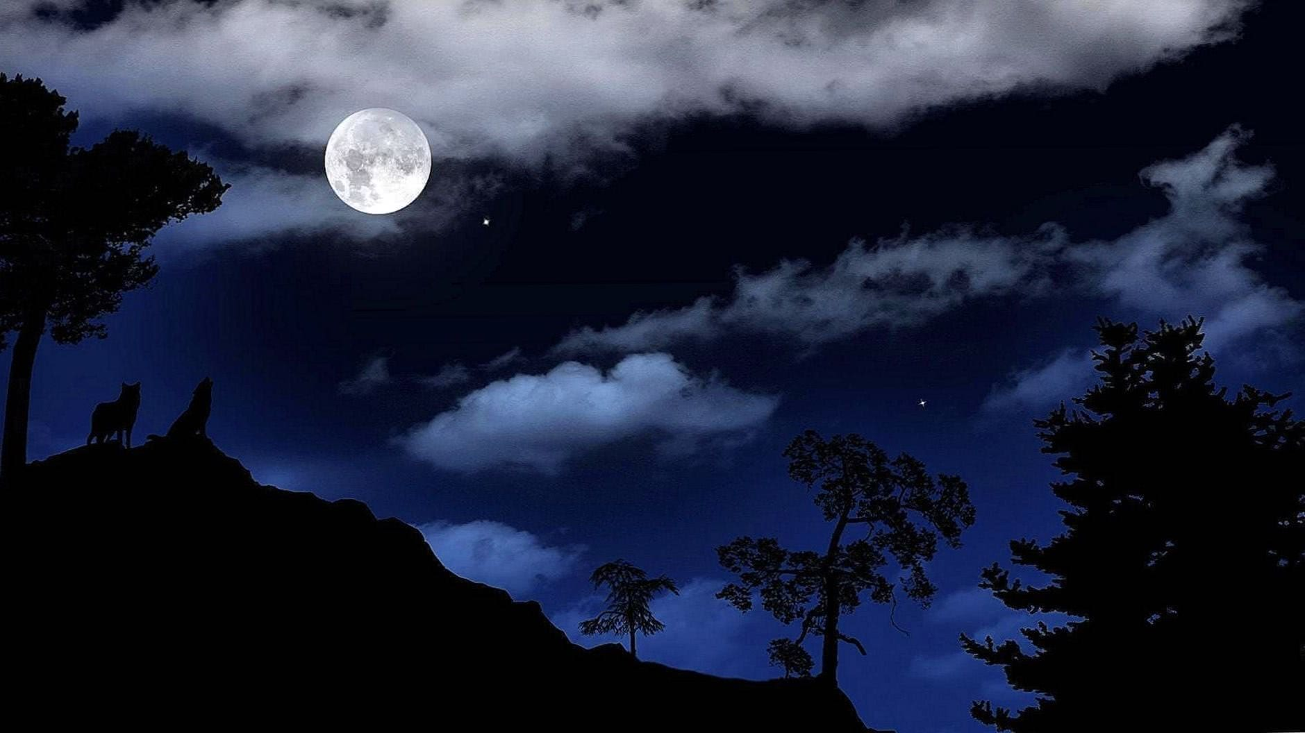Wolf Moonlight HD Wallpaper