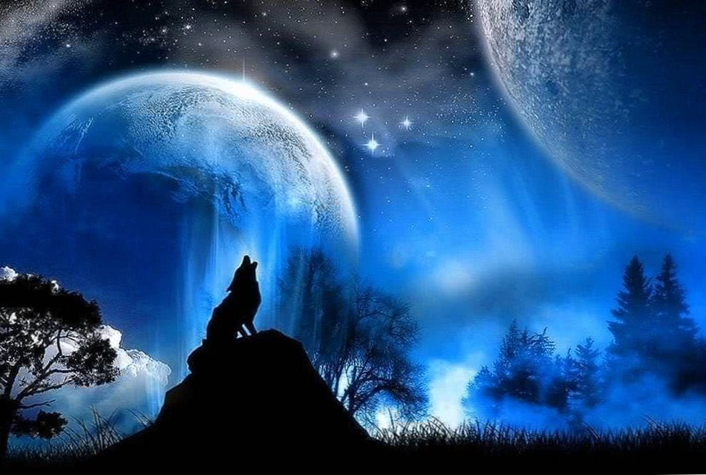 Wolf And Moon HD Wallpapers