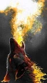 HD Wallpapers Phone Wolf