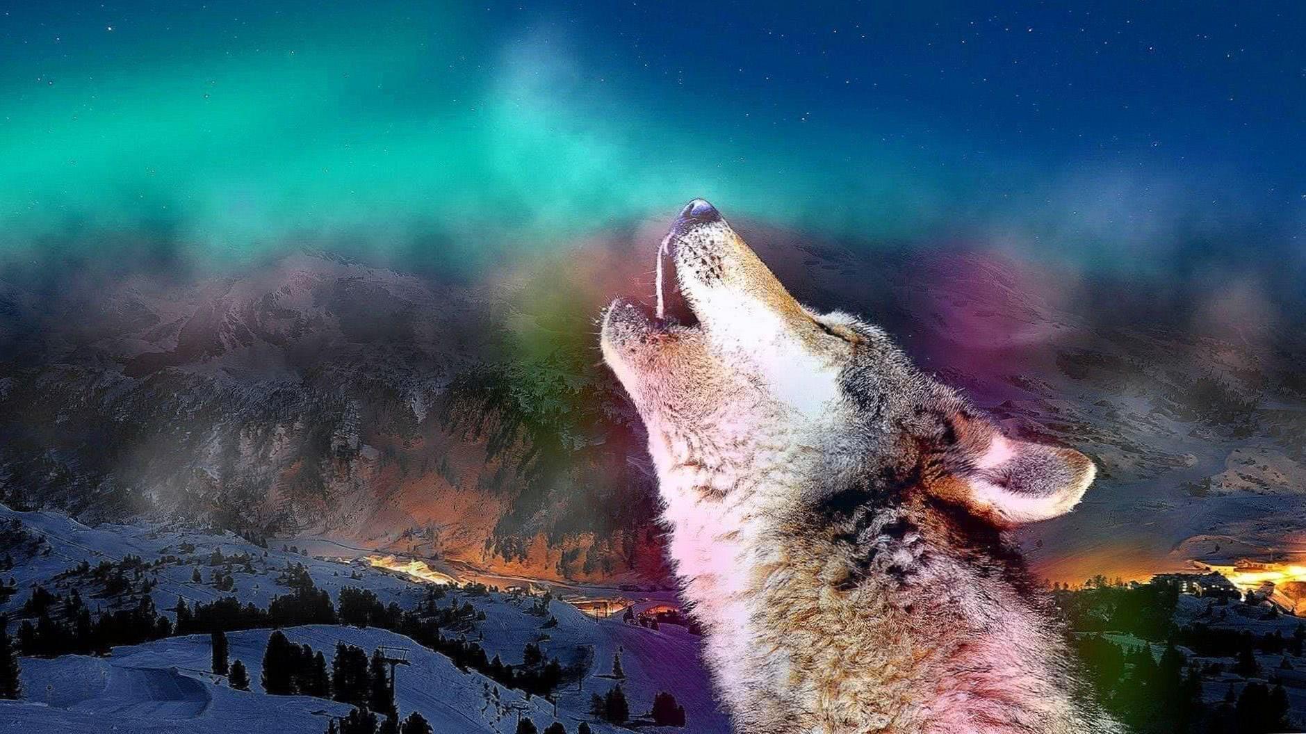 Wolf Howling HD Wallpaper