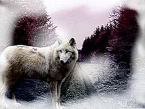 Fog Wolf Wallpapers