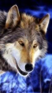 WhatsApp Wallpapers Wolf