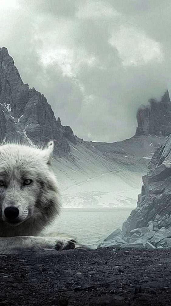 WhatsApp Wallpaper Wolf