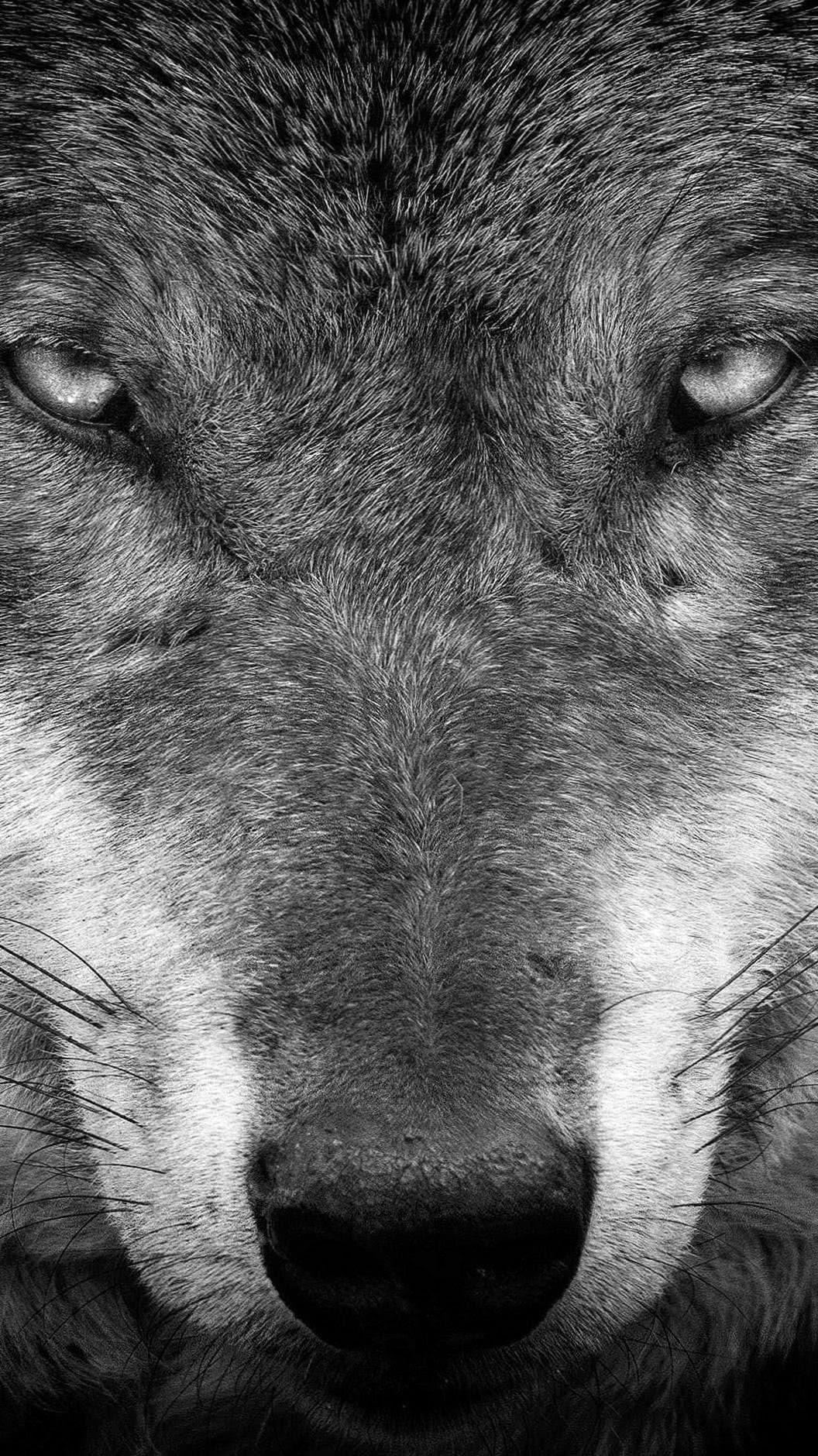 Wolf iPhone 7 Wallpaper