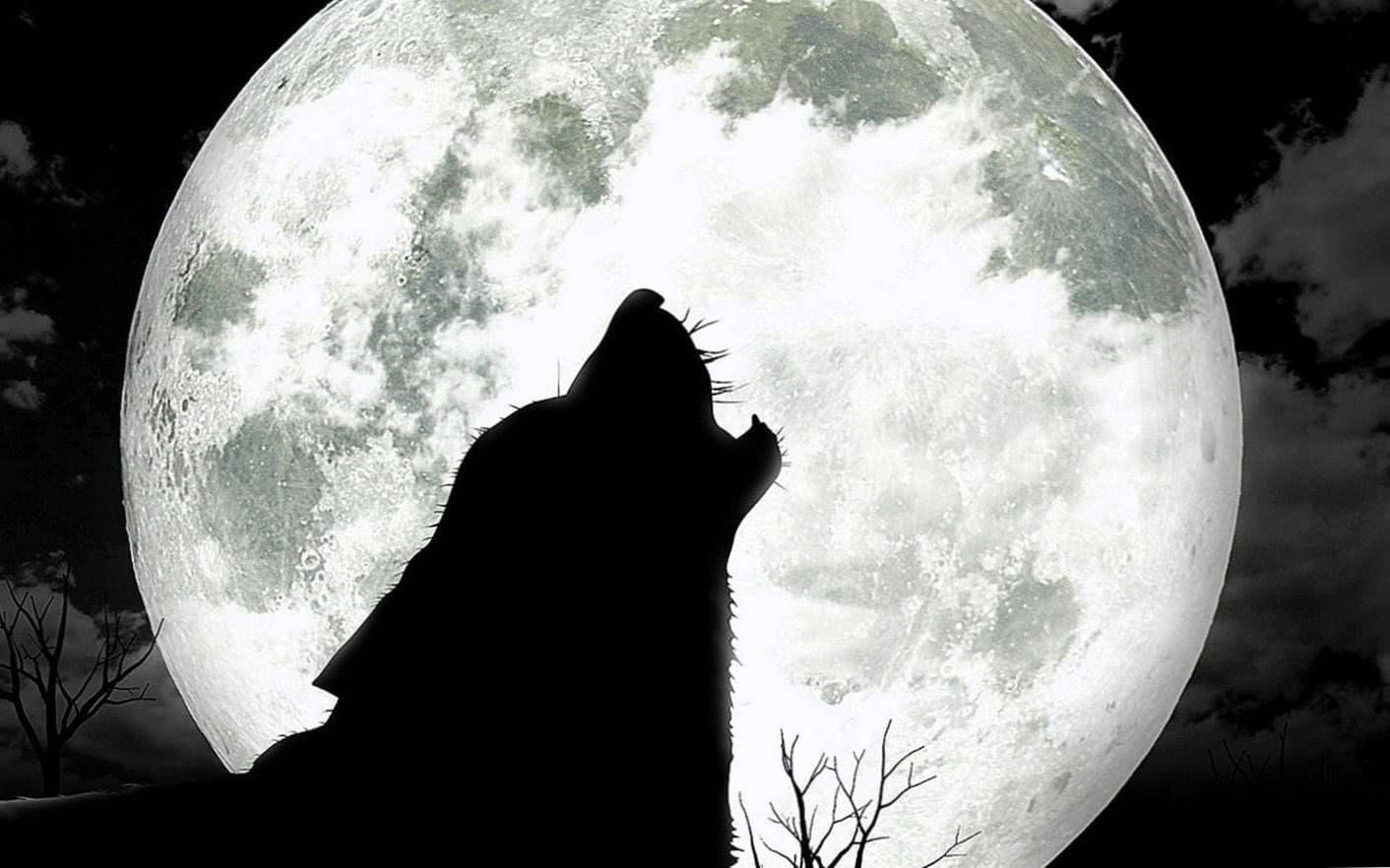 Moon And Wolf HD Wallpaper