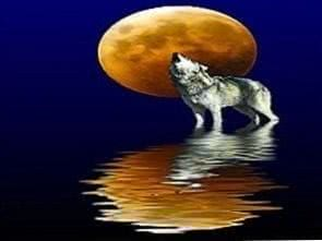 Wolf Wallpapers 1024x768